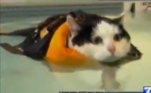This cat is getting back into swimming, too!